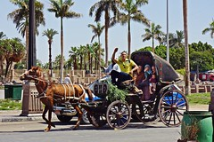 Luxor, Egypt - Nile Valley (Therese Beck) Tags: luxor egypt luxoregypt nilevalley egyptnilevalley luxornilevalley peopleofegypt