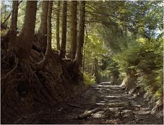 Ordinary polish summer / Zwykłe polskie lato (Piotr Skiba) Tags: beskidy pilsko poland pl summer forest road landscape kodakportra portra400
