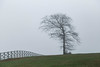 Tree & fence - Anderson Co., S.C. (DT's Photo Site - Anderson S.C.) Tags: canon 6d 24105mml lens andersonsc fence tree fog upstate south carolina scenic landscape southern pasture farm country road america usa
