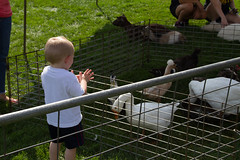 2017 New Student Move In Day-12.jpg (Gustavus Adolphus College) Tags: football gamegame homecoming game pc kylee brimsek petting zoo 20170923 animals outdoor outside students homecomingfootballgame pckyleebrimsek pettingzoo