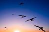Liberty #seagulls #santamonicabeach #blu #sunset #nikon5300 #usa (_solarimarta) Tags: blu santamonicabeach seagulls nikon5300 sunset usa