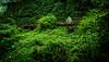 Karabük (okancan.kahraman) Tags: nature aydin didim antalya safranbolu karabük green sea macro shot