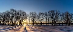 ile-NT-14 (Tasmanian58) Tags: mapletree maple érable neige snow sunrise ice river stlawrence orleansisland quebec canada sony a7ii batis18 batis zeiss sun morning