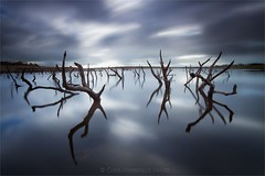 Submerged Trees 1 - Colliford Lake (Twogiantscoops) Tags: sky merge canon filters landscape shutterrelease wellies photomerge tree blur lake art motion ruins fineart carryaorgandonorcard effects westcountry luminosity creative chrismarshallsimages dancingtrees calendar cornish west country treescape haunting 5dmk2 photoshop mirrorlock eggtimer secret creativity cornwall lephotography manfrotto textural tripod 1635 photography lework collifordlake windy levels storms project scoopsimages lee countryside moody britishheartfoundation colliford wet areyouanorgandonor intervalometer giftoflife ndgrads clouds