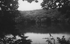 6x9 film (shou yokoya) Tags: 6x9 120film ilford delta voigtlănder rangefinder bessa heliar 105cm f35 lake summer water monochrome trees woods forest leaves reflection