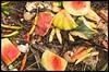 Compost #1 2017; Fruits & Veggies (hamsiksa) Tags: stilllife fruits vegetables color composition compost compostpile plants flora fruit roots seeds eggs eggshells melon carrots squash