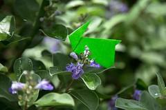 Rabbit and Vitex rotundifolia (Ichigo Miyama) Tags: ウサギとハマゴウ rabbit vitexrotundifolia origami おりがみ flower origamiphoto 花 ハマゴウ ウサギ 折り紙 折り紙写真origami 折り紙写真