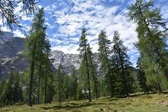 paesaggio alpino (OldGuz) Tags: oldguz italia italy altoadige valpusteria lagodibraies pragserwildsee crodadelbecco parconaturalefanessennesebraies dolomiti lago lake montagna mountain alberi trees platinumheartaward