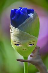 Evolving Iris (swong95765) Tags: flower bud bokeh pretty hand eyes face female sentient evolution evolve cute beautiful