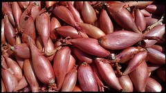 Echalote de Tradition! (lobotomyzed) Tags: echalote organic bio agriculturebiologique shallot alliumcepa food sauce