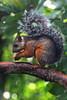 Costa Rica 2017 (nouailleric) Tags: écureuil costarica animal canon eos500d sigma70300f456apodgmacro nature naturephotographie parcnationalduvolcantenorio rioceleste voyage travel