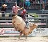 00020032 (David W. Burrows) Tags: rodeo cowboys cowgirls horses bulls bullriding children girls boys kids boots saddles bullfighters clowns fun