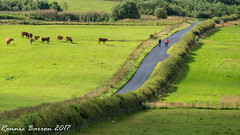 leading lines (RCB4J) Tags: ayrshire landscape rcb4j ronniebarron scotland sonydt1870f3556 sonyilca77m2 agricultural cattle composition countryside cows dogs farming fences fields grass hedges irvinevalley leadinglines photography play playing roadscape walkers walking