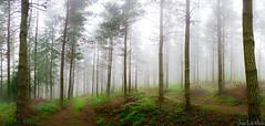 OLLARRETA PANO 2 (juan luis olaeta) Tags: landscape paisages bosque basoa forest photomerge photoshop lightroom canon canoneos60d panoramicas nieblas fog pinar dima bizkaia euskalherria basquecountry
