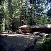 Fallen Monarch (Scott Holcomb) Tags: roysredwoodpreserve marin california zenzabronicas2 nikkorh135f5cmlens zenzabronica82mml1afilter kodakportra160film 6x6 120film mediumformat photoshopdigitalization epsonperfectionv600