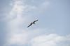 Scatto al volo! (Shooting in RAW) Tags: uccelli gabbiano mare nuvole colori cielo animali flickr digital d600 afs 80200 nikon nef raw