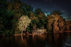 Dusk on the Mississippi (Dennis Herzog) Tags: river rivers mississippiriver mississippi missouri midwest trees dusk goldenhour water flora