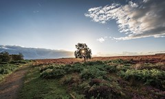 Moorland Tree..... (johngregory250666) Tags: nature british countryside camera lens green yellow orange stone nikon nikkor hiking walking lines clouds sky blue moss lichen out brook glow grass imagesofengland amazing sunlight water light sun outdoor grassland field landscape hill trees plant serene moors ridge great national park mountain moor moorland dale new d5200 rock formation rays edge heather tor world pass outside cloud temperature view peak district long england north overcast path flickr bright derbyshire stones blooming rural road