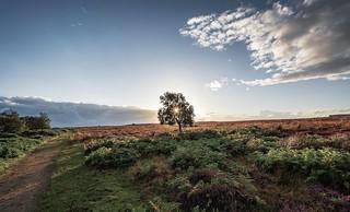Moorland Tree.....