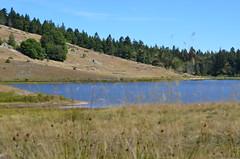 Lac des Pises - Cévennes (dfromonteil) Tags: lac lake cévennes montagne mountain nature forêt forest wild wilderness sky ciel blue bleu vert green brown marron colors couleurs bokeh