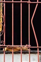 The cat that was running away when he wanted. (Carlos Arriero) Tags: santiagodecuba cuba gato cats composición composition carlosarriero animal color colour colors city ciudad urban nikon d800e tamron 70200mmf28