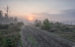 Misty Morning (Martine Lambrechts) Tags: misty morning sunrise landscape tree nature