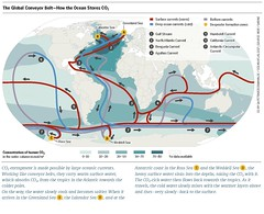 The Global Conveyor Belt – How the Ocean Stores CO2 (boellstiftung) Tags: oceanatlas climatechange pollution sea ocean heinrichboellfoundation maritimeindustry shippingindustry overfishing ecosystem biodiversity