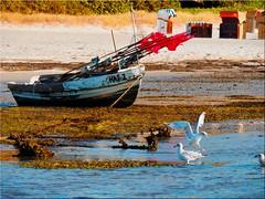 Stranded on the beach of the Baltic Sea (Ostseetroll) Tags: deu deutschland geo:lat=5406132318 geo:lon=1076463358 geotagged ostseeküste schleswigholstein sierksdorf ostsee balticsea fischerboot fishingboat möwen seagulls niedrigwasser lowwater gestrandet strand beach runaground olle