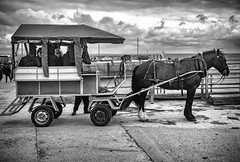 Aran Islands Horse Ride (rick miller foto) Tags: aran islands galway ireland horses horse buggy drawn carriage docks shore clouds black white bw