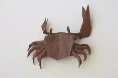 Fiddler crab by Satoshi Kamiya (test-fold) (Egor Prokhorenko) Tags: origami fiddler crab satoshikamiya tissue paper art crease pattern pleats complex