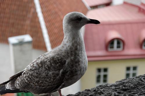 Tallinn-77