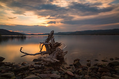Driftwood (mclcbooks) Tags: curecantinationalrecreationarea bluemesareservoir colorado lake clouds mountains sunset dusk evening landscape le longexposure log branch driftwood