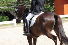 _MG_5622 (dreiwn) Tags: dressage dressurprüfung dressurreiten dressurpferd dressyr ridingarena reitturnier reiten reitverein reitsport ridingclub equestrian horse horseback horseriding horseshow pferdesport pferd pony pferde dressur dressuur tamronsp70200f28divcusd