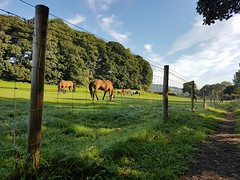 The horse fence - Happy Fence Friday (katy1279) Tags: hffhappyfencefridaywirefencemetalfencehorseshorsefieldbluesky
