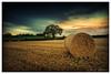 And Still They Appear (Deek Wilson) Tags: haybale tree sky landscape field dundonald northernireland canon7dmkii sigma1020 leefilters longexposure countryside hay bale fence