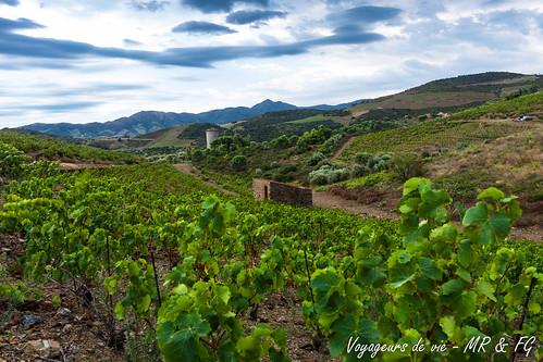 "On sait d'où vient le bon vin • <a style=""font-size:0.8em;"" href=""http://www.flickr.com/photos/151667760@N04/37144663441/"" target=""_blank"">View on Flickr</a>"