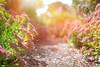 Into the Pink... (KissThePixel) Tags: september septembersun sun sunlight autumn autumncolours autumnlight beautiful beauty bokeh softbokeh macro perspective pov depthoffield dof dofalicious path garden gardenscape pink pinkflowers bush nikon nikondf sigma sigmaart 50mm 14