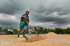 Paddy Drying - Odisha (Raghunathan Anbazhagan) Tags: cwc chennaiweekendclickers cwctravelwalk people flickr india orissa odisha clouds drama dramatic paddy agriculture women woman lady rain rainy cloudy monsoon colors incredibleindia canon canon70d wideangle wide storiesofindia village rural life