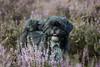 #Amy (Janne Fairy) Tags: hund dog animal pets pet haustier tier heide heath violet eyes nature natur bokeh schärfentiefe outdoor drausen canon canon500d eos500d