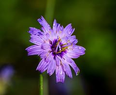 All New. (Omygodtom) Tags: contrast composition colorful flower flickr flora nature nikkor park nikon natural nikon70300mmvrlens raindrop purple green blue existinglight