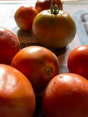 Tomatoes (Elise de Korte) Tags: fr france frankrijk ldf lafrance groentetuin harvest harvst moestuin oogst potager récolte tomaat tomate tomaten tomates tomato tomatoes vegetablegarden veggiegarden