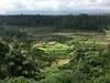 Mahagiri rice terrace of Karangasem (parulguptaa) Tags: bali indonesia asia rendang riceterrace mahagiri karangasem