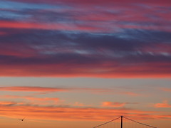 Sunrise Over the Bridge . (Explore #222, Aug. 20, 2017) - (Irene, Montreal, QC) Tags: sunlightoverthebridge sunriseoverthebridge sunrise colourfulsunrises sunrises beautifulnature wonderfulnature awesomenature awesomeskies sky skies redskies allskies beautifulskies bridge lionsgatebridge outdoors outdoorscenes lights 1001nights 1001nightsmagiccity westvancouverbc morning mornings beautifulmornings bird birdflying seagull explore