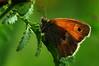 Butterfly (na_photographs) Tags: schmetterling makro wings flügel fühler insekt