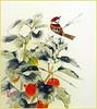 Japanese-lantern and Eurasian tree sparrow (Japanese Flower and Bird Art) Tags: flower japaneselantern physalis alkekengi solanaceae bird eurasian tree sparrow passer montanus passeridae ryo nakamura nihonga shikishi japan japanese art readercollection