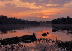 Serene Sunset (elenaleong) Tags: sunset reflections naturepark forest reservoir lowerpeircereservoir serene sunsetcolours tranquil silhouettes elenaleong