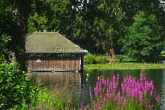 Boathouse Summer (Dave Roberts3) Tags: wales gwent newport tredegarhouse lake boathouse birds seagulls reflection reflecting trees flowers purple loosestrife lilies waterlilies summer