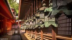 Kasuga Taisha Shrine Lanterns (ONLY-JAPAN-PHOTOGRAPHY) Tags: 2014 2015 2016 ancient buddhism best culture d610 green honshu japan japón japani japon japanese nature nihon nikon nippon red shintoism shinto summer tradition travel travelling view world 日本 本州 일본