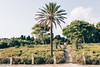IMG_0428 (Sebastiano Pupillo) Tags: donnafugata castello ragusa sicily