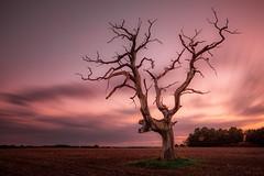 Dead or Alive (Dave Holder) Tags: longexposure landscape leefilters leebigstopper light le tree trees